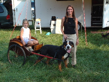 Greater swiss mountain dog pulling - photo#11